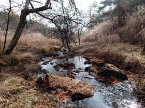 池のクルミ湿原-3