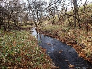池のクルミ湿原-4 のコピー