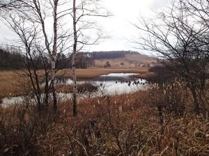 池のクルミ湿原-7