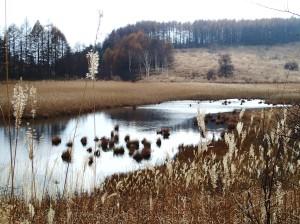 池のクルミ湿原-8