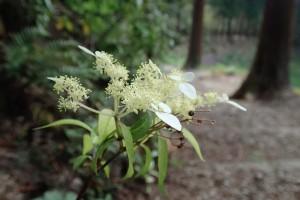 山の花ー1