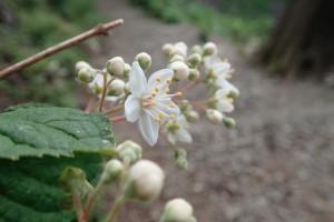 山の花ー2