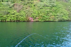 芦ノ湖岸の緑-1