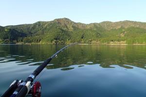 芦ノ湖岸の緑-2
