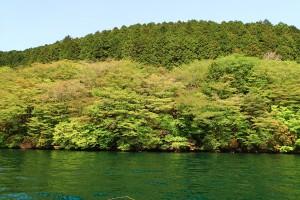 芦ノ湖岸の緑-4