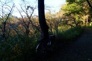 滝山城趾-11